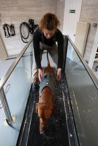 Brook Barn Canine Hydrotherapy Hannah Meeker